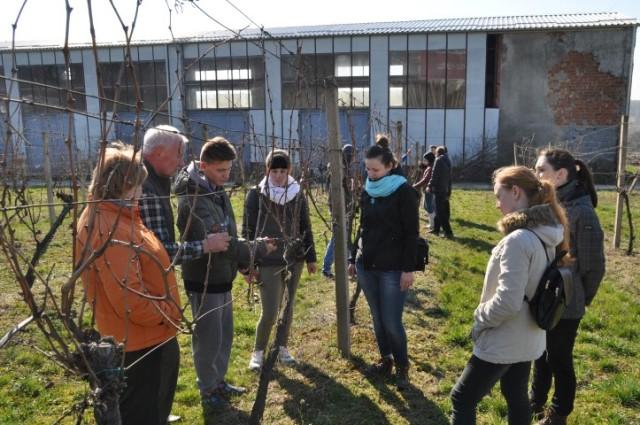 Свалявські студенти ознайомлюються з технологією обрізки винограду у Словаччині