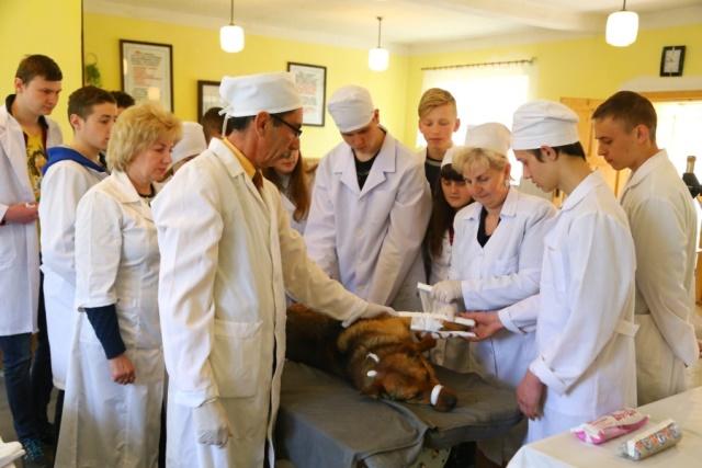Накладують пов'язку собаці у Мукачівському аграрному коледжі