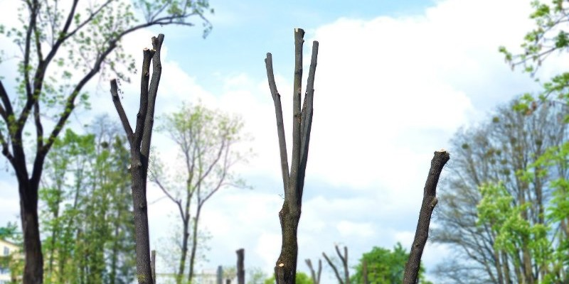 Кронування дерев