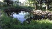 Озеро в Закарпатському обласному еколого-натуралістичному центрі учнівської молоді