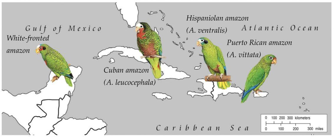 Геном папуги